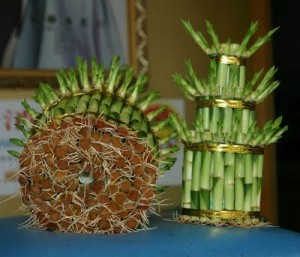 Выращивание бамбука дома