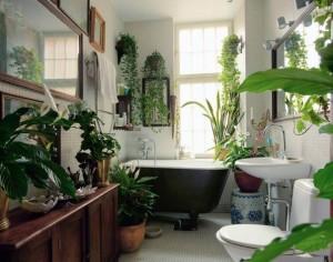 Выращиваем растения в ванной комнате