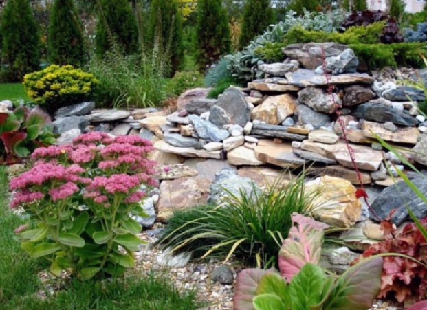 Цветок садовый камень