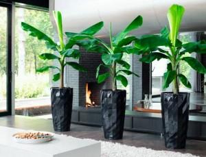 Комнатные растения в офисном интерьере