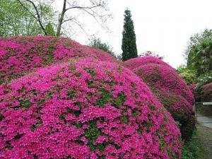 Обзор цветущих кустарников для садового участка