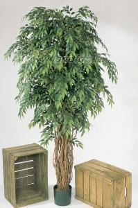 Экзотические растения для квартиры