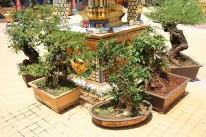 Красота и польза миниатюрных деревьев