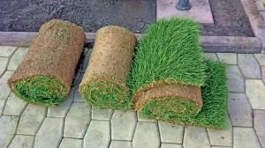 Готовый газон в рулонах