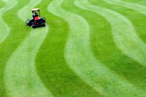 Как косить газон на зиму