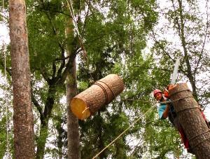 Валка и удаление деревьев