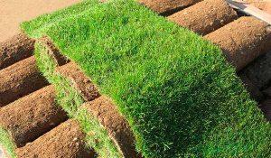Что надо знать о рулонном газоне