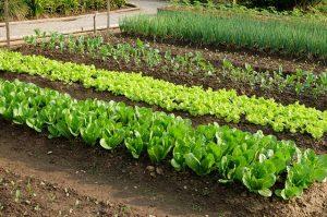 Хорошая почва – богатый урожай