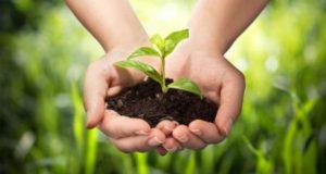 Как выбрать средства защиты растений